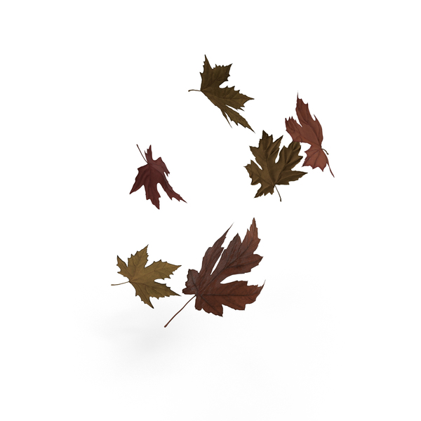 Floating Maple Leaves PNG & PSD Images