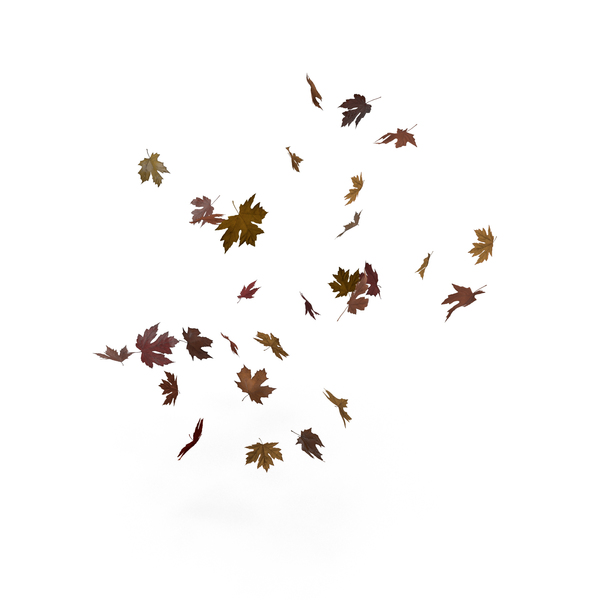 Floating Maple Leaves Object