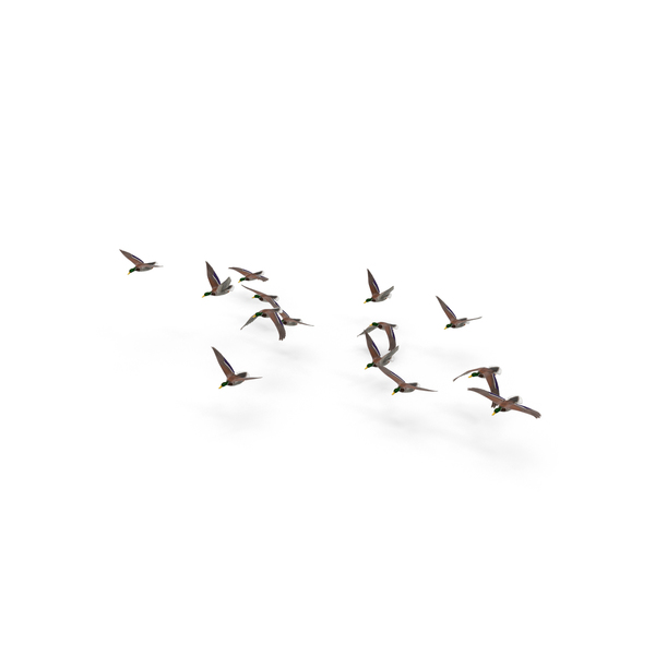 Flock of Ducks PNG & PSD Images
