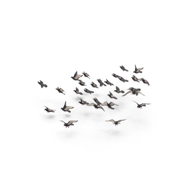 Pigeon: Flocking Birds PNG & PSD Images
