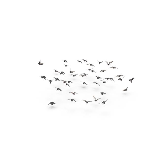 Flocking Birds PNG & PSD Images