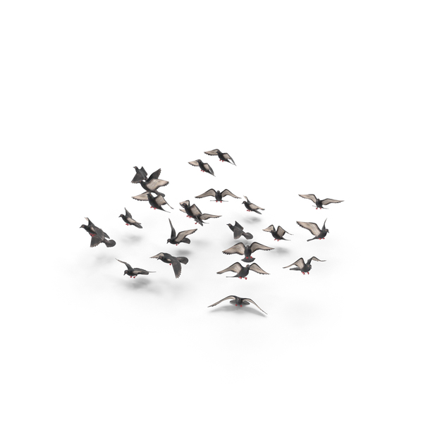 Flocking Birds Pigeons Flying PNG & PSD Images