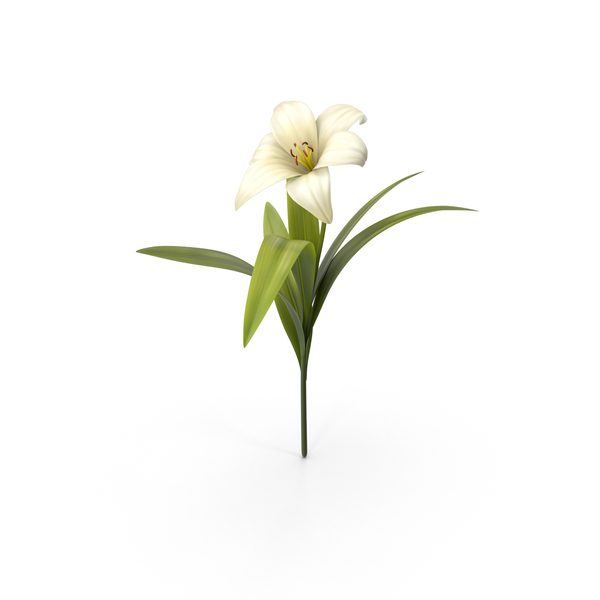 Flower PNG & PSD Images