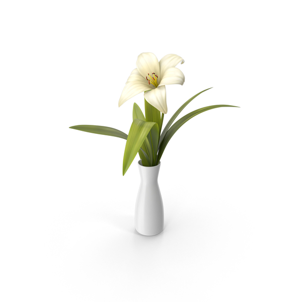 Flower in a Vase PNG & PSD Images