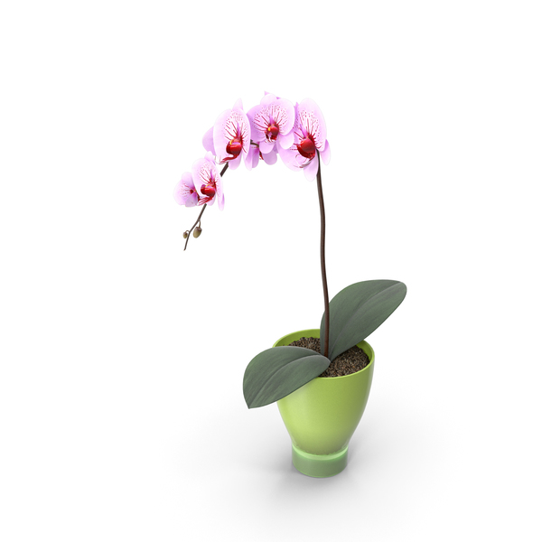 Flower Orchid Splash PNG & PSD Images