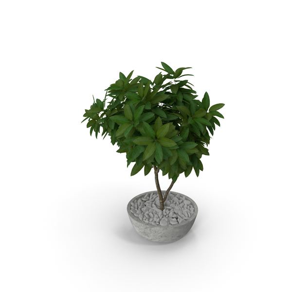 Flower Pot Plumeria PNG & PSD Images