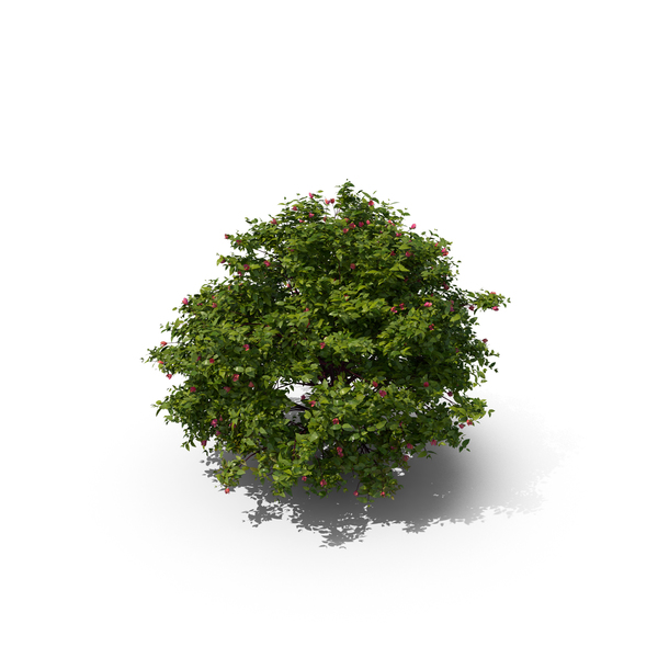 Flowering Bush PNG & PSD Images