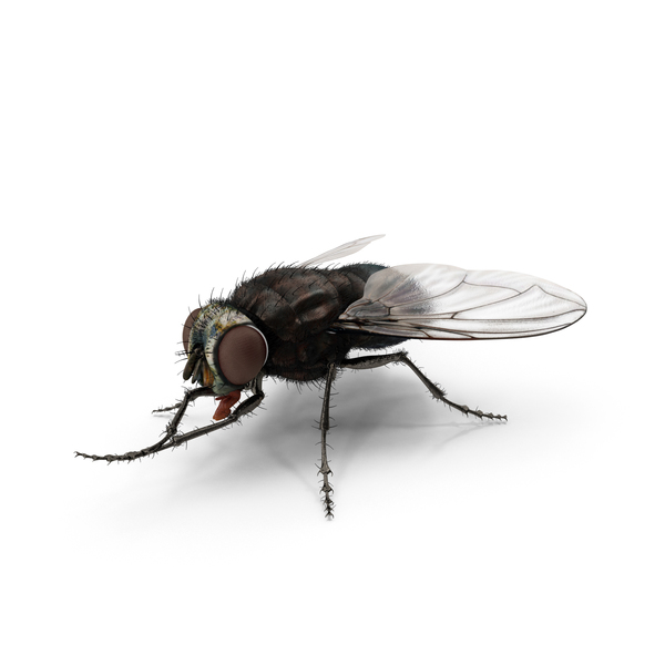House: Fly Object