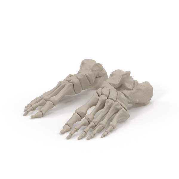 Skeletal: Foot Bones PNG & PSD Images