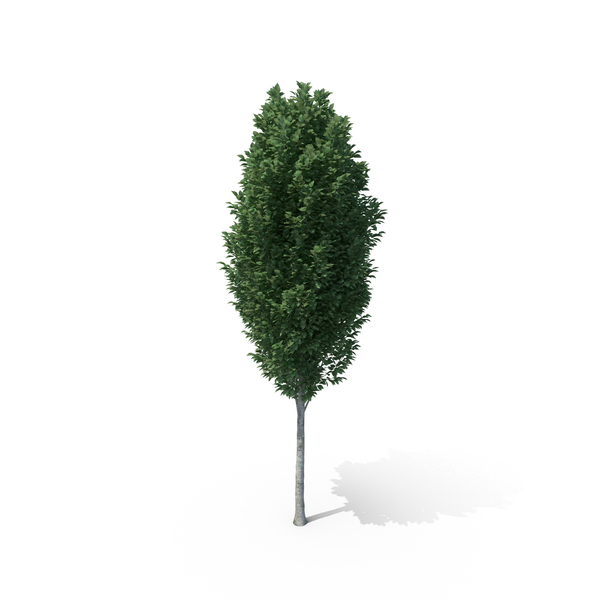 Frans Fontaine Tree Object