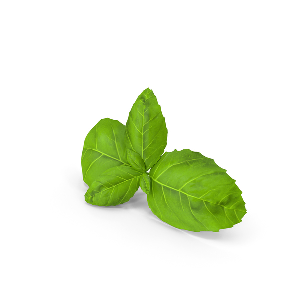 Fresh Basil Leafs PNG & PSD Images
