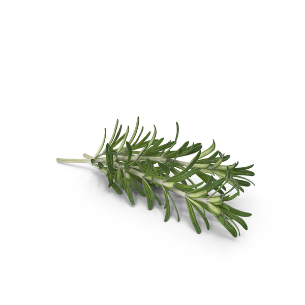 Fresh Rosemary PNG & PSD Images