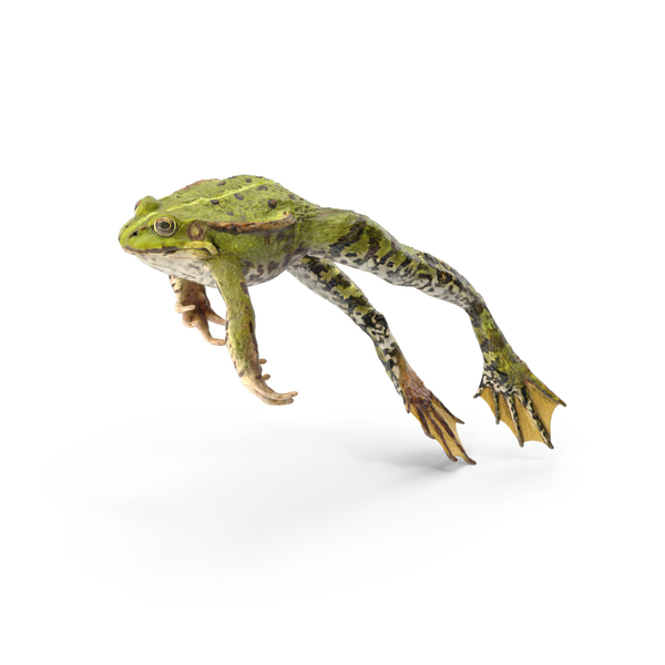 Frog Jumping Pose PNG & PSD Images