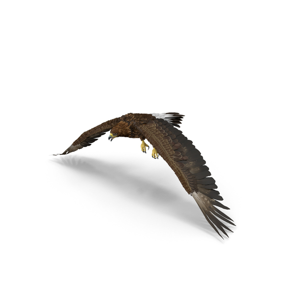 Golden Eagle Flapping Object