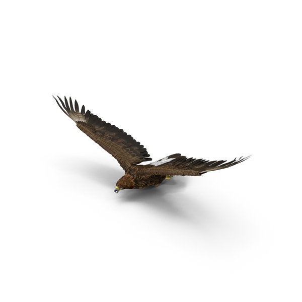 Golden Eagle Flying Object