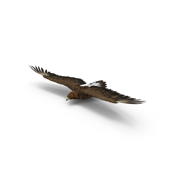 Golden Eagle Gliding PNG & PSD Images