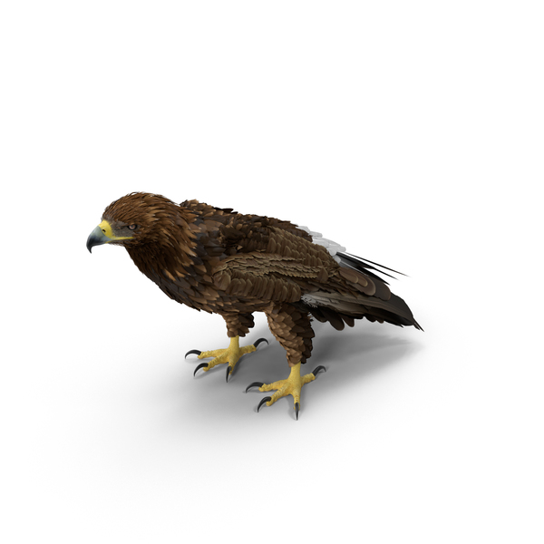 Golden Eagle Standing Object