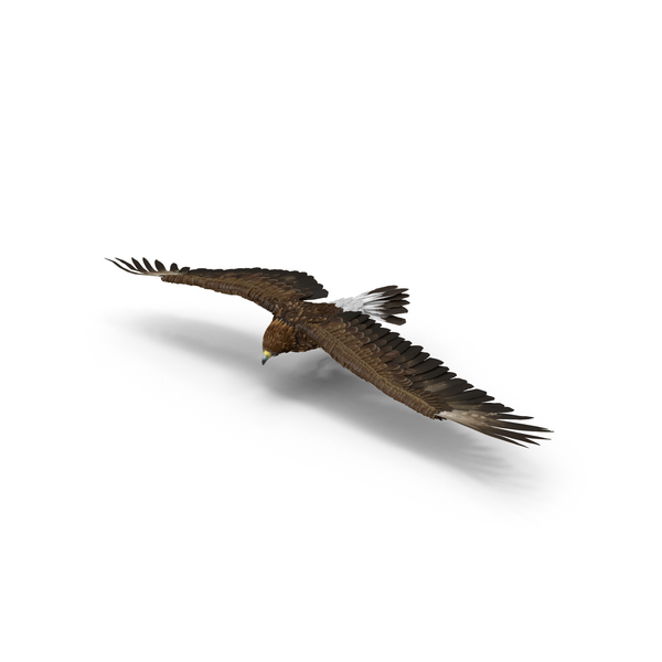 Golden Eagle Turning PNG & PSD Images