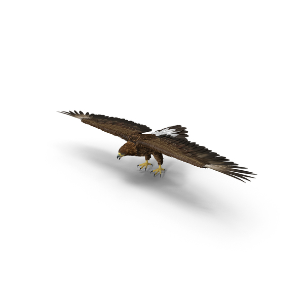 Golden Eagle Wings Spread PNG & PSD Images