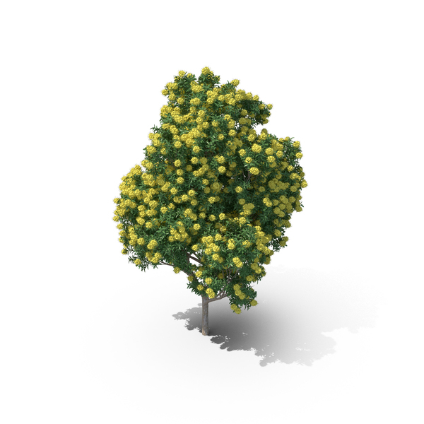 Golden Penda Tree PNG & PSD Images