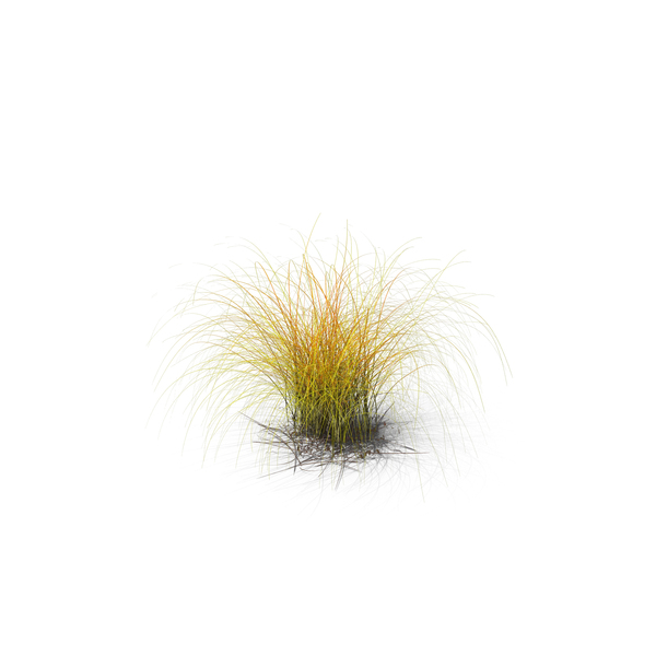 Grasses: Golden Sedge PNG & PSD Images