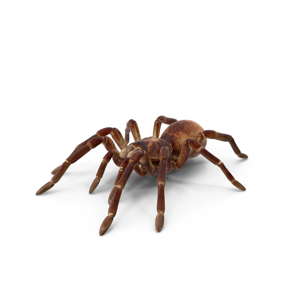 Spider: Goliath Birdeater PNG & PSD Images