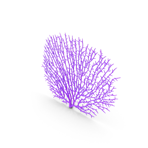 Gorgonaria Fan Coral PNG & PSD Images
