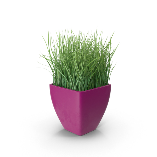 Grass in Purple Planter PNG & PSD Images
