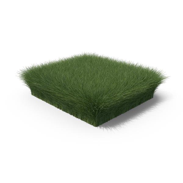 Summer: Grass Shape PNG & PSD Images
