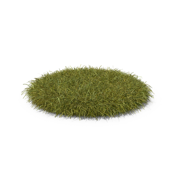 Grass PNG & PSD Images