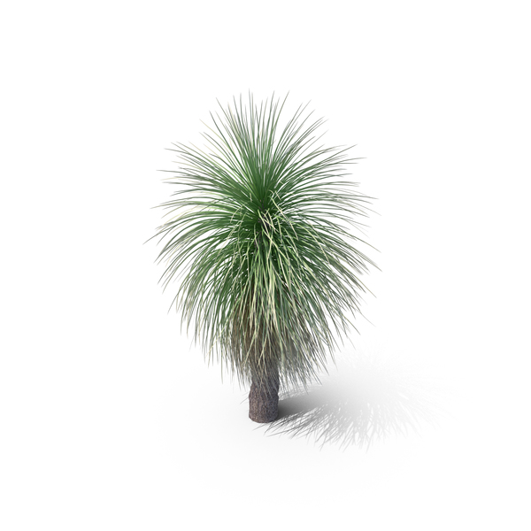 Grass Tree PNG & PSD Images