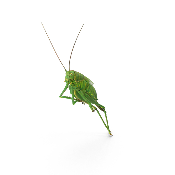Grasshopper PNG & PSD Images
