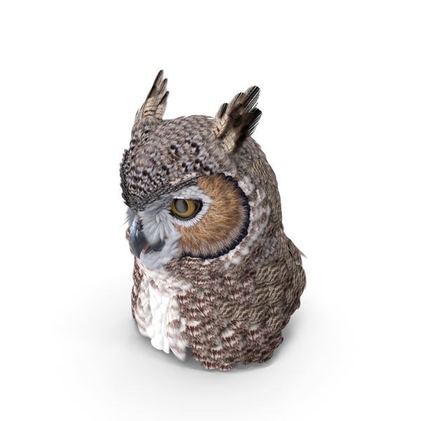 Great Horned Owl Head PNG & PSD Images
