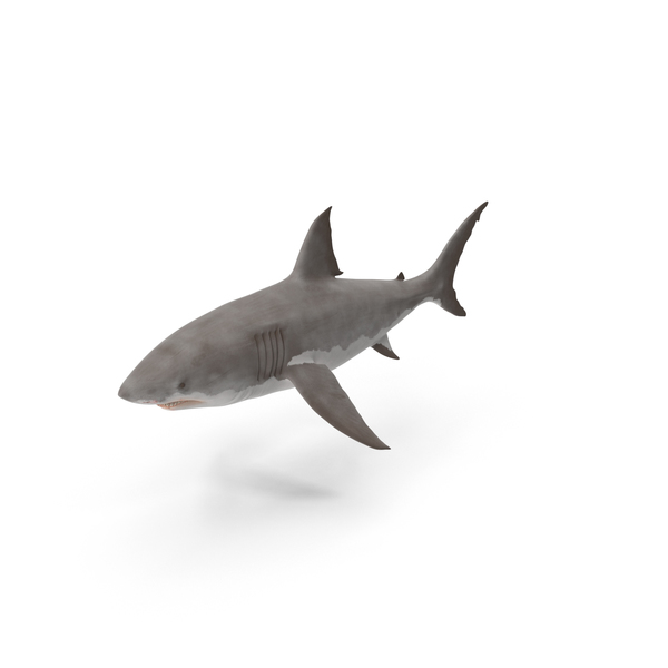 Great White Shark Object