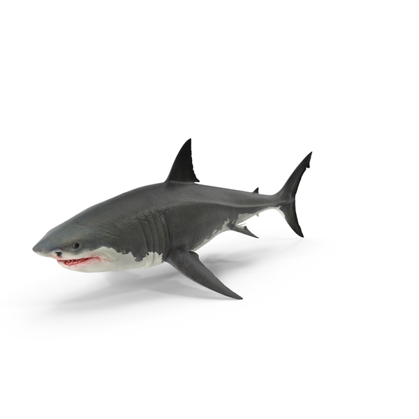 Great White Shark PNG & PSD Images