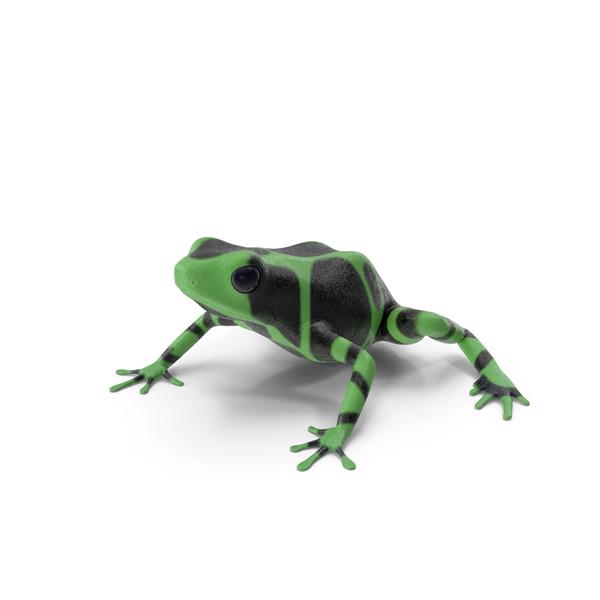 Green Black Dart Frog PNG & PSD Images