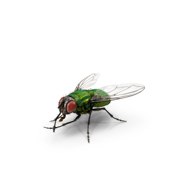 Green Bottle Fly Rubbing Hands PNG & PSD Images