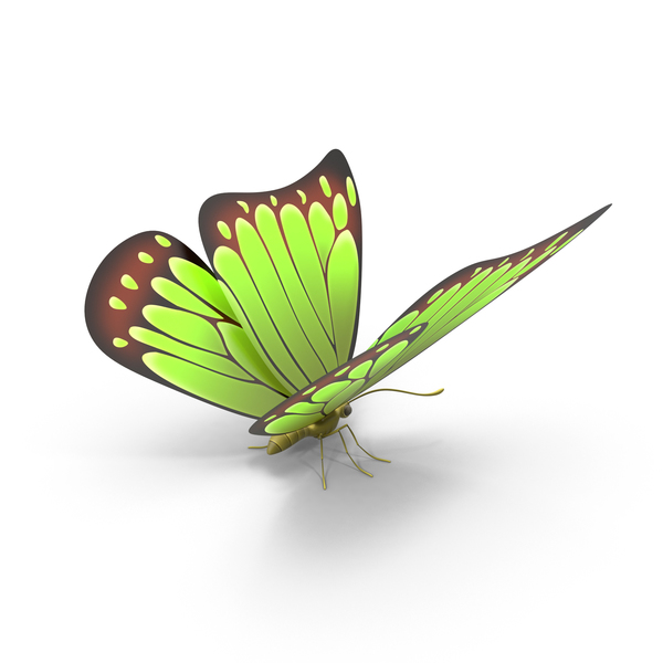 Green Butterfly PNG & PSD Images