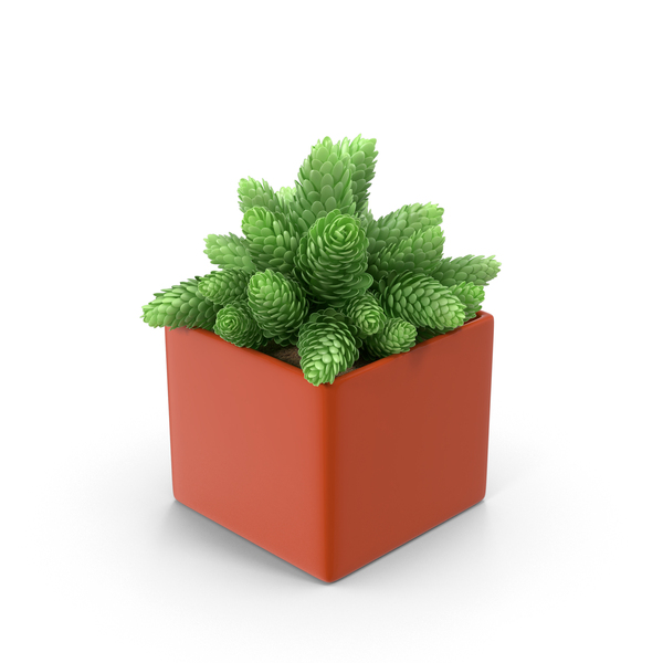 Flower: Green Cones in Red Pot PNG & PSD Images