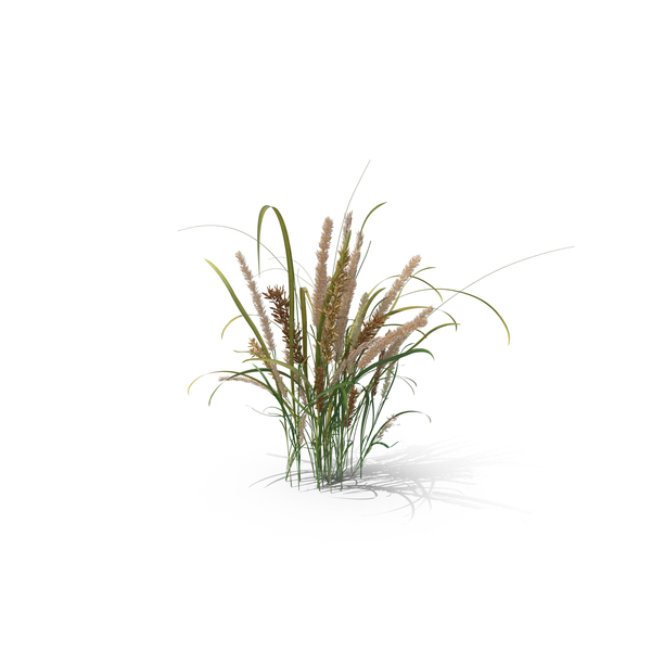 Grasses: Hairy Melic PNG & PSD Images