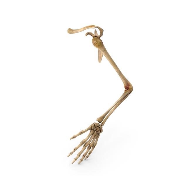 Hand skeleton PNG & PSD Images