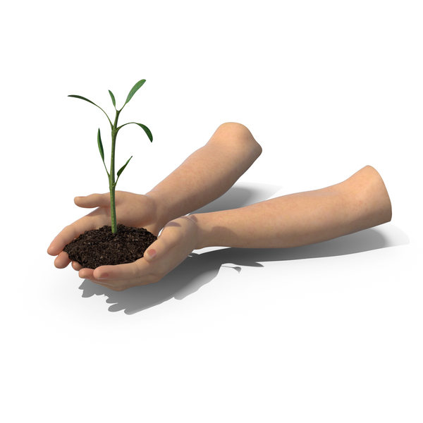 Hands Holding Plant PNG & PSD Images