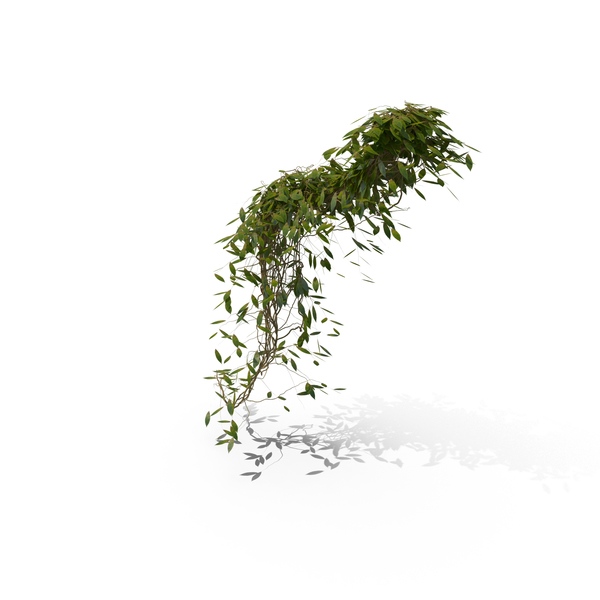 Hanging Ivy PNG & PSD Images