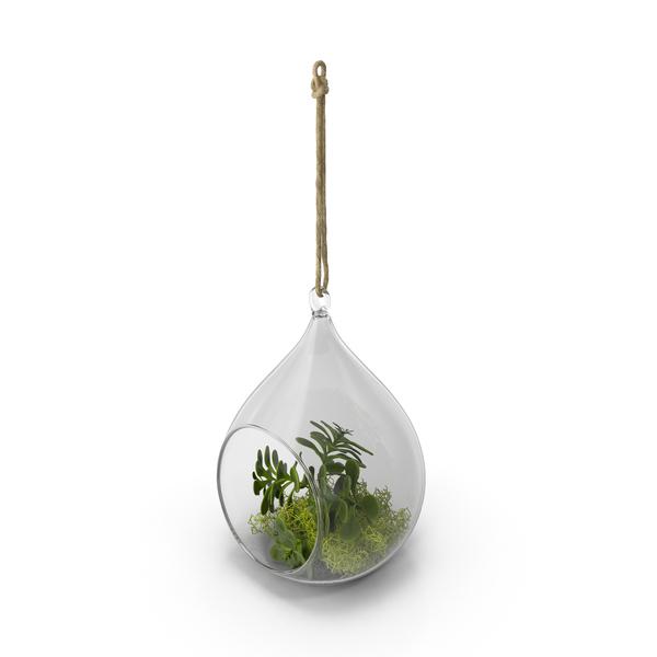 Hanging Terrarium PNG & PSD Images