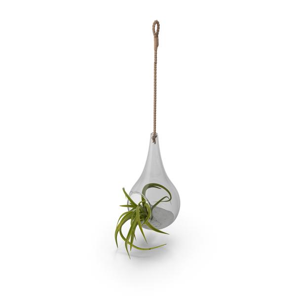 Succulent: Hanging Terrarium PNG & PSD Images