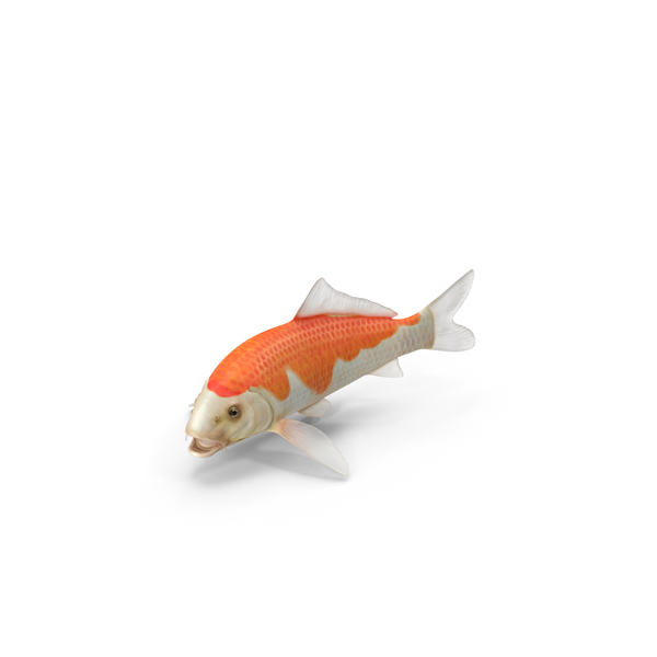 Harivake Koi Fish Object