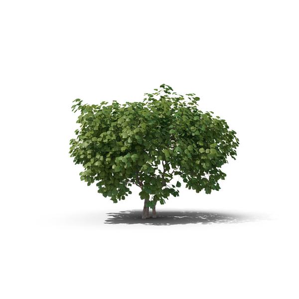 Hazel Tree PNG & PSD Images