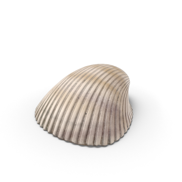 Seashell: Heart Cockle Shell PNG & PSD Images