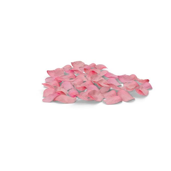 Shape: Heart of Petals Pink PNG & PSD Images