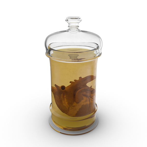 Heart Specimen in Jar PNG & PSD Images